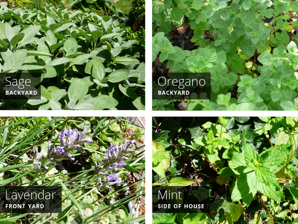 Garden Herbs | Rather Square