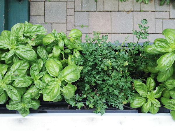 How To Plant Window Box Gardens Rather Square