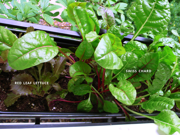 How to Plant Window Box Gardens | Rather Square & How to plant window box gardens | Rather Square Aboutintivar.Com