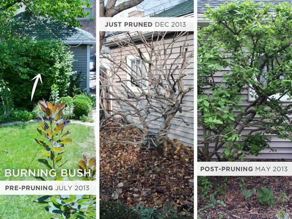 Pruning a Burning Bush | Rather Square