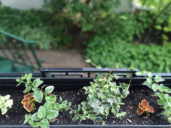 Window Box Garden | Rather Square