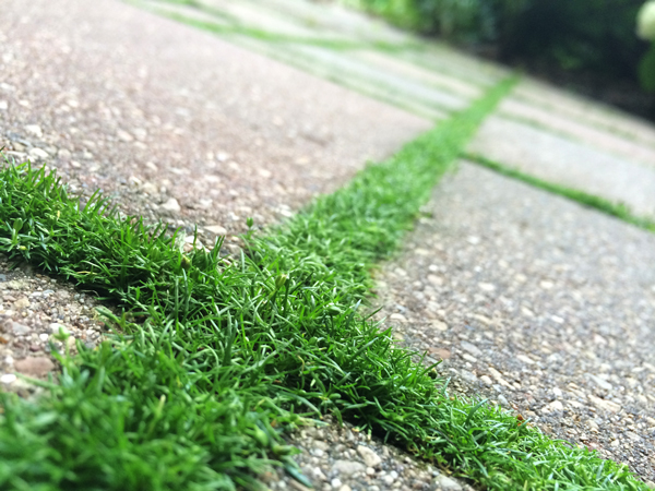 Cultivating Moss | Rather Square