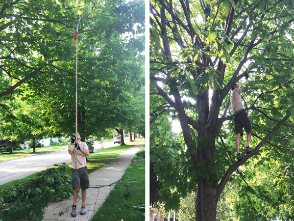Trimming Oak Tree Branches | Rather Square