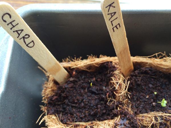 Indoor Seed Starting for a Spring Garden